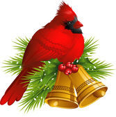 Cardinal Bird with Christmas bells — Stock Vector
