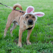 Easter dog — Stock Photo