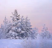 Snow-bound fir-tree — Stock Photo
