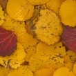 Red and yellow withering leaves — Stockfoto