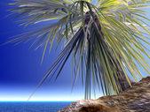 Single palm — Stock Photo