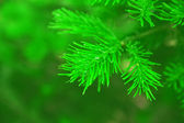 Brightly green prickly — Stock Photo