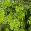 Stock Photo: Brightly green prickly