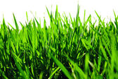 Juicy green summer grass — Stock Photo