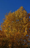 Temporada de otoño — Foto de Stock