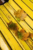 Maple leaves lie — Zdjęcie stockowe