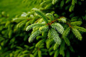 Green prickly branches — Stockfoto