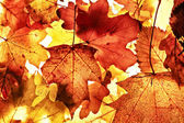Autumn background. — Stock Photo