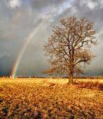 Rainbow over а field. — Stock Photo