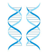 DNA structure — Stock Vector