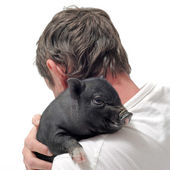 Liitle piggy and man — Stock Photo