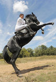 At yetiştirme — Stok fotoğraf
