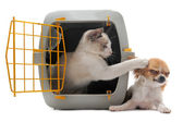 Kitten in pet carrier and chihuahua — Stock Photo