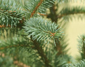 Christmas tree branches — Stock Photo