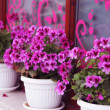 Lilac flowers — Stock Photo #5993614