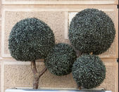 Green miniature tree — Stock Photo