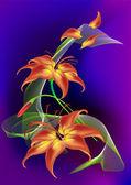 Rysunek kwiatu lilii — Wektor stockowy