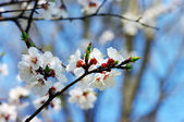 Spring blooming flowers — Stock Photo