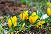 Beautiful spring flowers in the field — Stock Photo