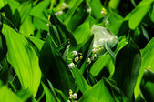Lily-of-the-valley over natural background. Green forest with fl — Stock Photo