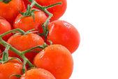 Tomatoes on the vine — Stock Photo