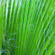 Leaves of a palm — Stock Photo