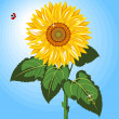 One Sunflower — Stock Vector