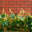 Stock Photo: Wall brick plant