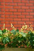 Wall brick plant — Stock Photo