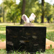 Young woman using laptop in park — Stock Photo #6530253