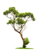 Tree on white background — 图库照片