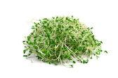 Brotes de alfalfa — Foto de Stock