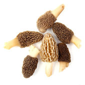 Group of gray and yellow morel mushrooms isolated on white — Stock Photo