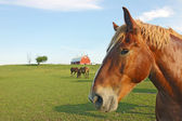 Horses and barn with copy space — Stock Photo