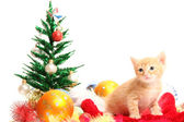 Small kitten and christmas ornaments — Stock Photo