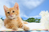 Small lovable kitten with camomiles — Stock Photo