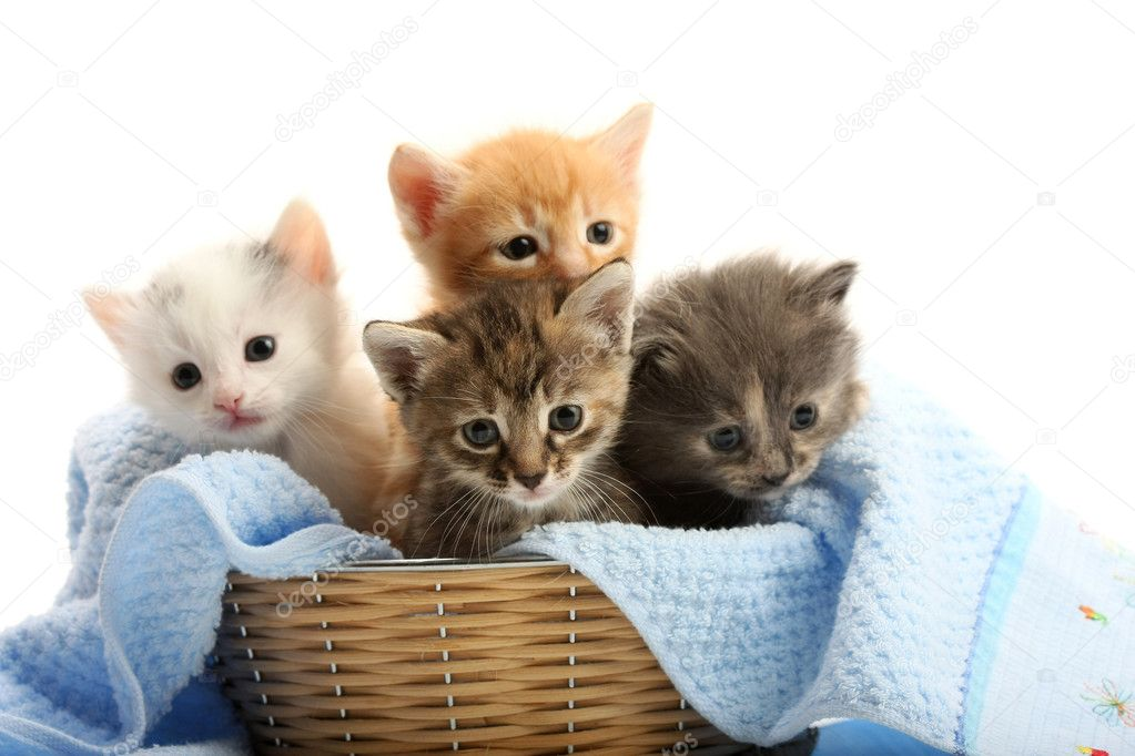 Small kittens in straw basket — Stock Photo © parrus #5981131