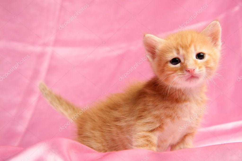 小可爱小猫,粉红色的背景上 — 图库照片#5981197