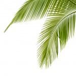 Palm tree — Stock Photo #5617923