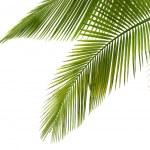 Palm tree — Stock Photo #5883919
