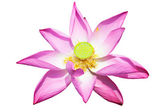 Lotus flower isolated on white — Stock Photo