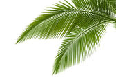 Palm verlaat — Stockfoto