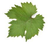 Grape leaf. — Stock Photo