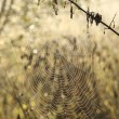 Stock Photo: Cobweb backlit by the morning sun