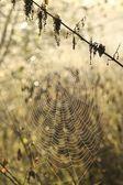 Cobweb backlit by the morning sun — Stock Photo