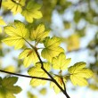 Close-up of spring leaves — Stock Photo