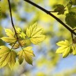 Close-up of spring leaves - Stock Photo