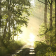 Forest trail on a foggy spring morning — Stockfoto