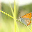 Butterfly on a blade of grass — Stock Photo