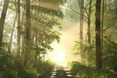 Misty spring deciduous forest at dawn — Stockfoto